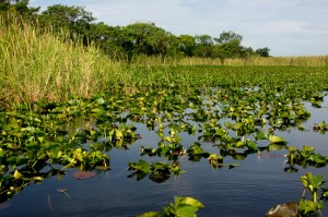 Airboat tours West Palm Beach - Florida Everglades