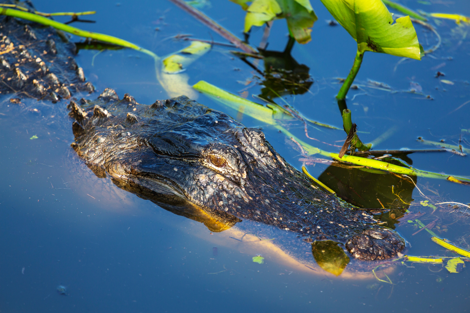 Everglades Airboat Rides And Tours In West Palm Beach