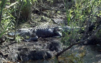 Everglades Tours West Palm Beach